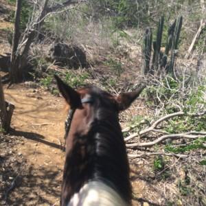 paardrijden-op-curacao-05