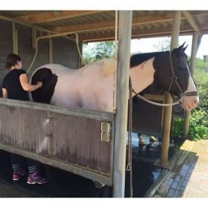paardrijden-op-curacao-06