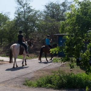 paardrijden-op-curacao-07