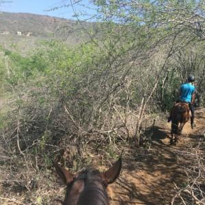 paardrijden-op-curacao-08