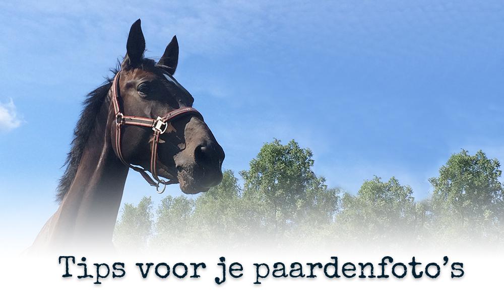 9 tips voor je paardenfoto's