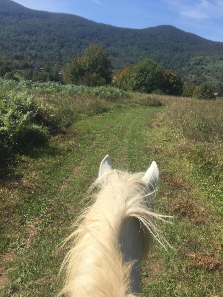 Paardrijden in Kroatie